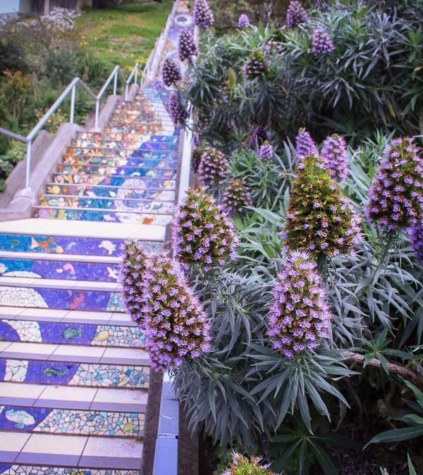 Mosaic Steps 16th Avenue San Francisco