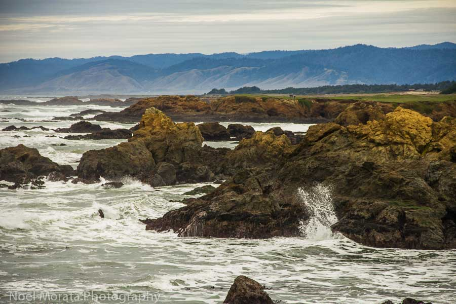 A fun getaway to Fort Bragg along the Northern California coastline
