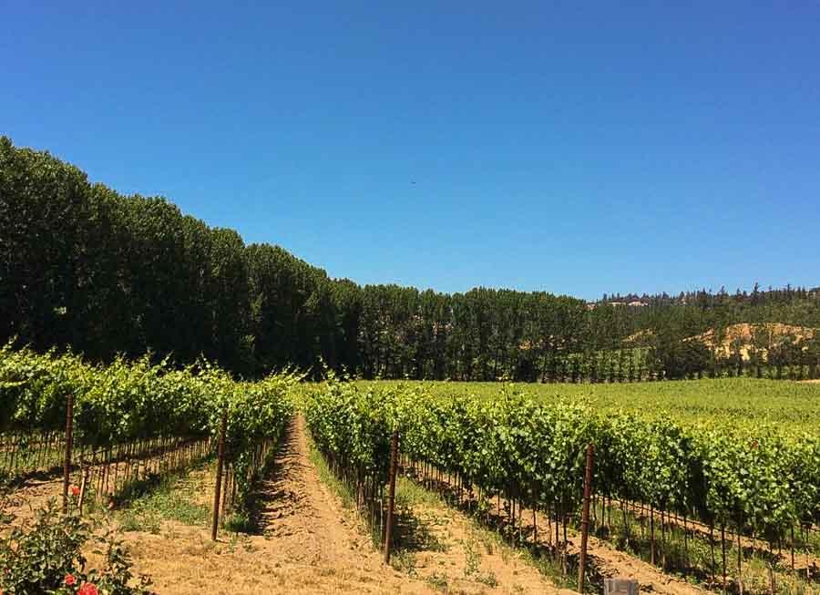Go wine tasting in Mendocino