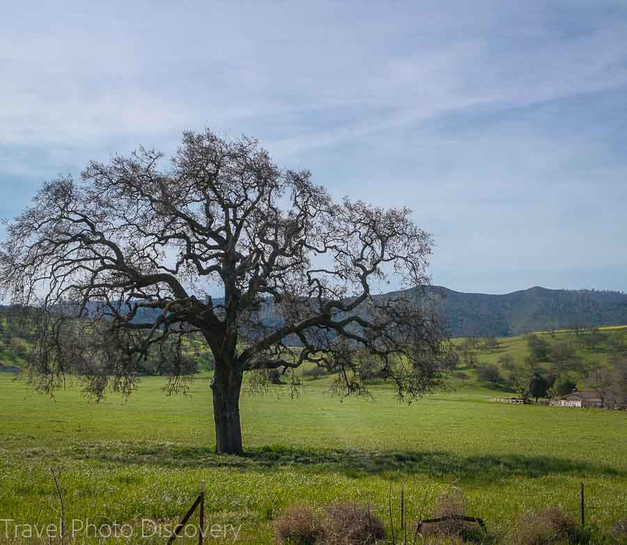 How to get to Pinnacles National Park