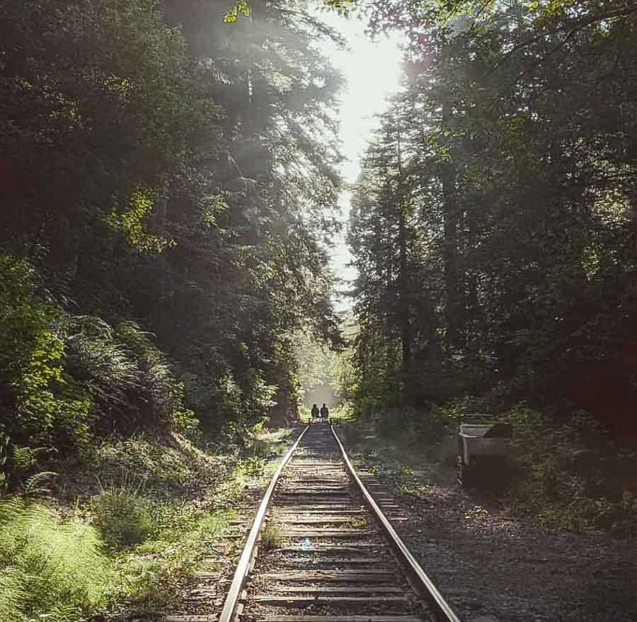 Ride the Skunk Train or Railbike Tour