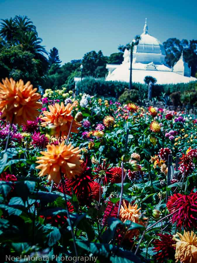 Places to visit around the Dahlia garden and the Conservatory of Flowers