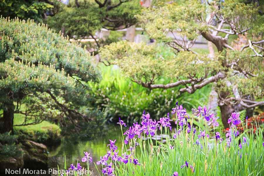 History of the Japanese Tea Garden in Golden Gate Park