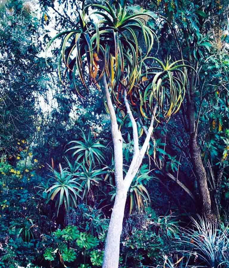 Cactus garden entry