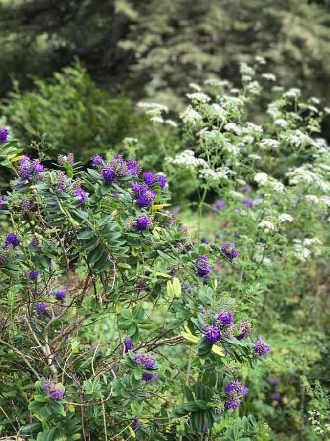 Mediterranean Gardens at the San Francisco botanical garden
