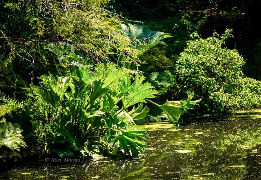 History of the San Francisco Botanical Garden