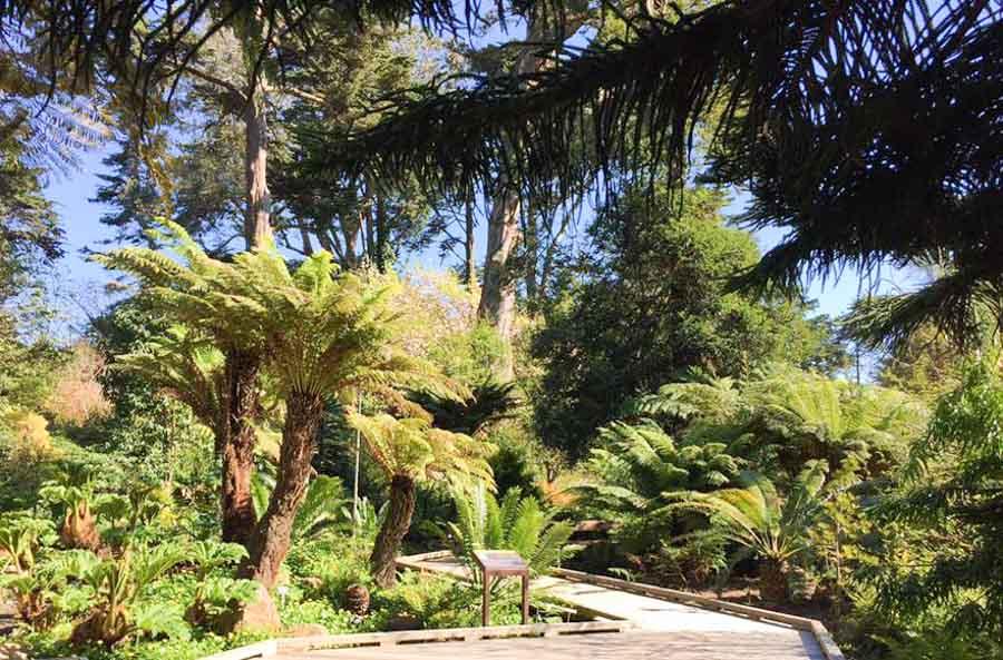 the prehistoric garden at the San Francisco Botanical Garden