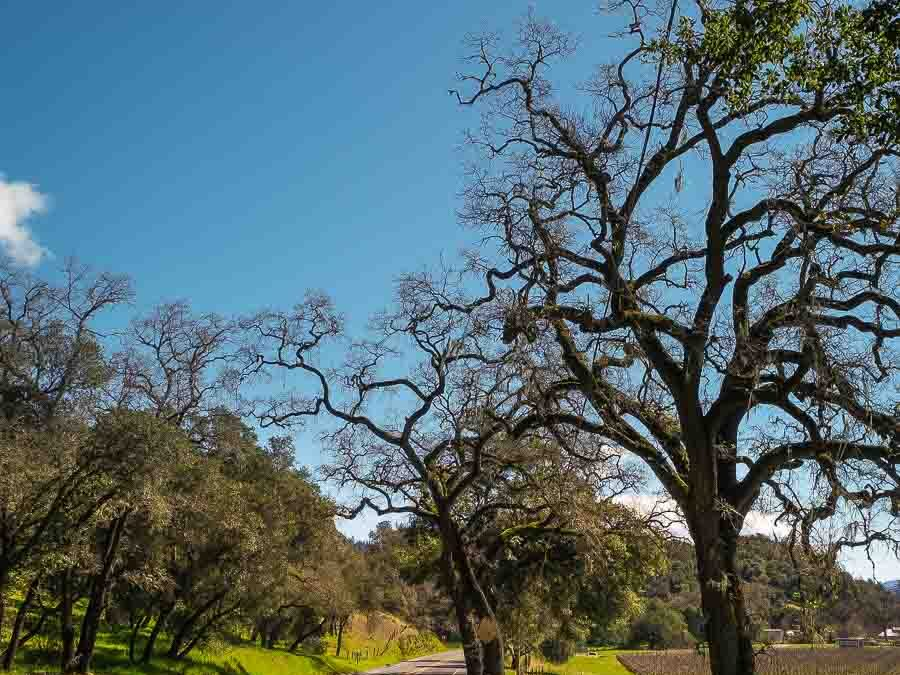 Things to do in Napa besides wine tasting