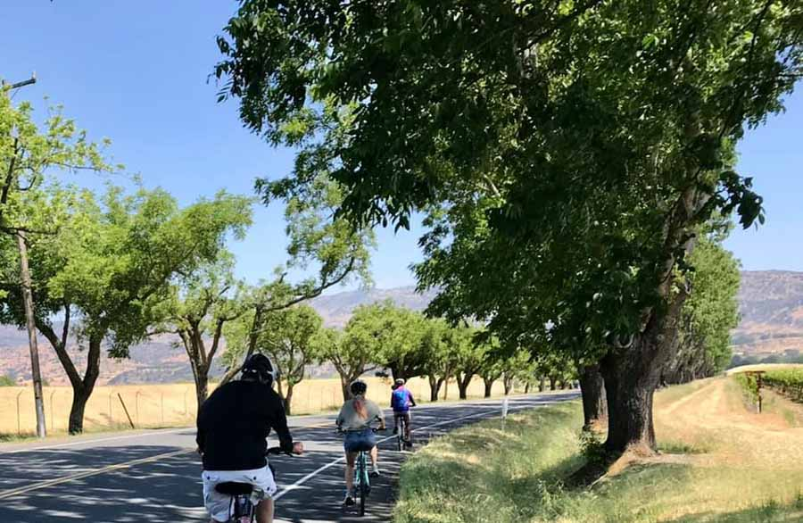 Have a mountain biking experience in Napa