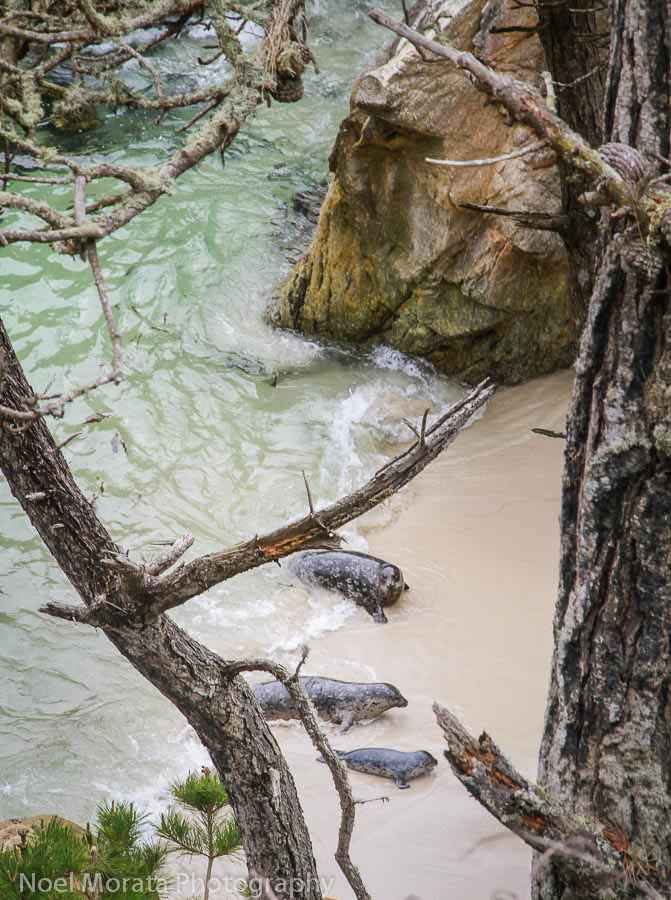 Additional notes and tips to visiting Point Lobos
