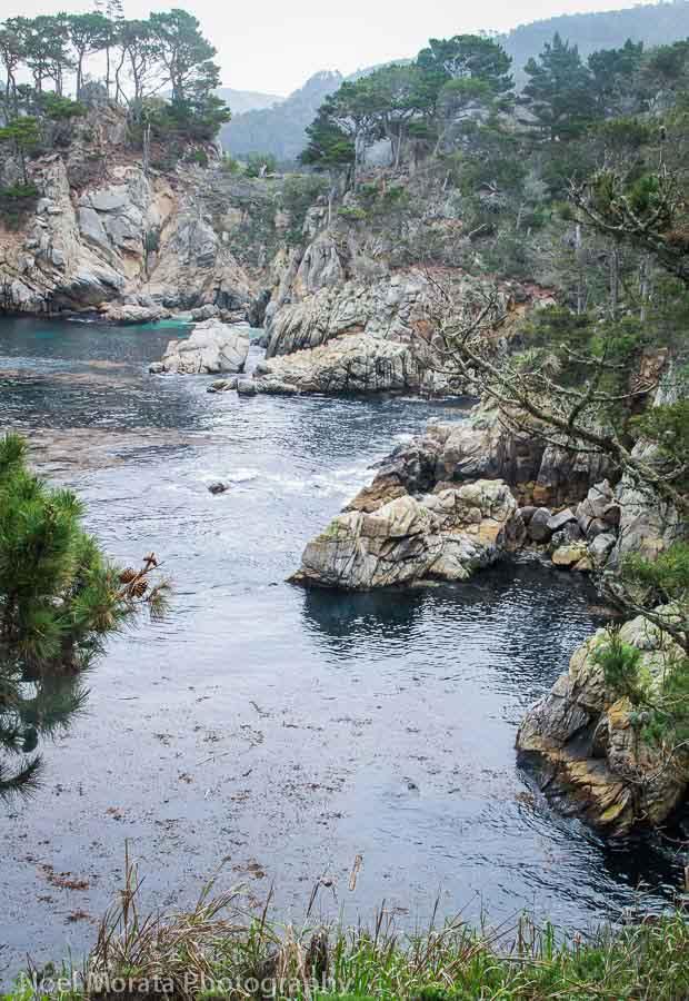 Point Lobos Loop Trail