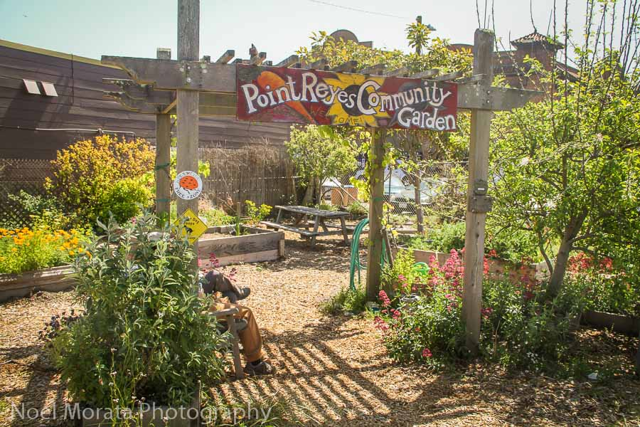 Road trip through Marin County to Point Reyes Station