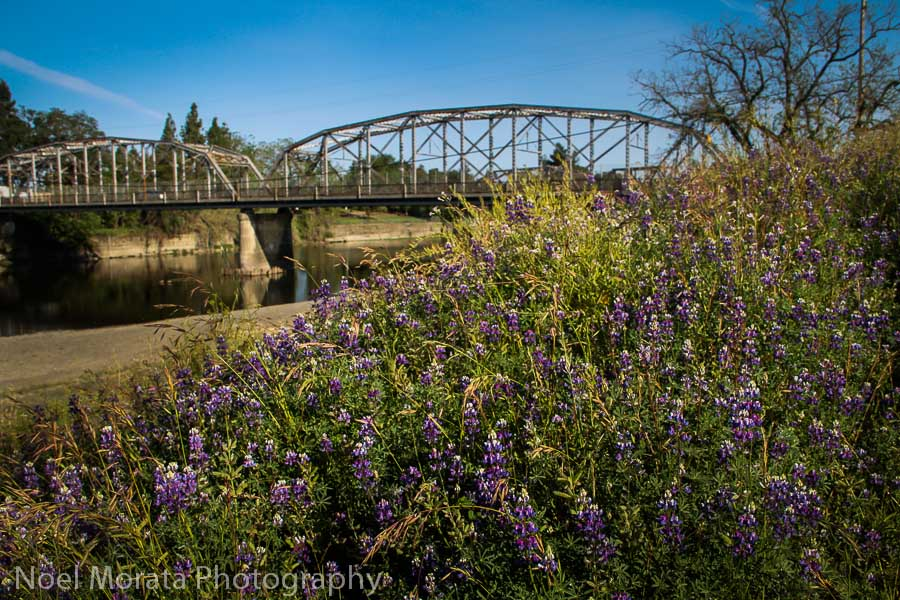 Relax in the Russian River area