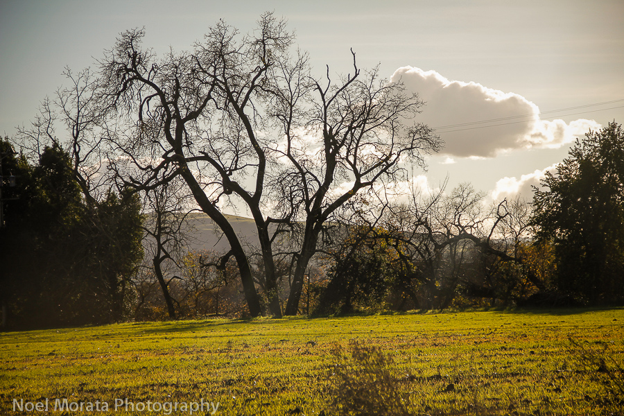 Get outdoors in Sonoma