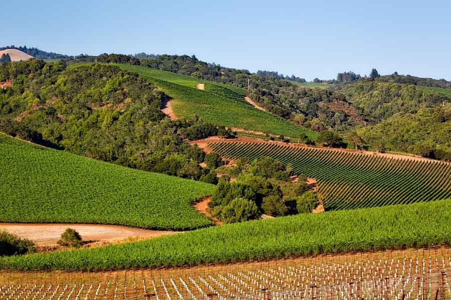 Take the cool and scenic route West Dry Creek road to Healdsburg